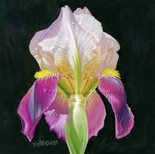 Original Fine Art Painting A Day Iris Flower Still Life Drawing by
