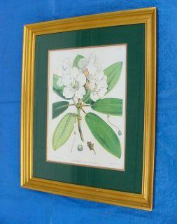 Ethan Allen Home Collection J D H Del Fitch Lith Botanical Litho Art