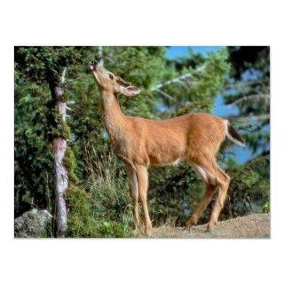 La foto maravillosa ofrece un ciervo con el cuello hacia fuera