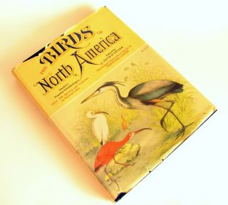 Large Format Book Studers Popular Ornithology The Birds North America