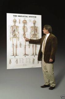 Giant Skeletal Skeleton System Anatomical Chart Poster