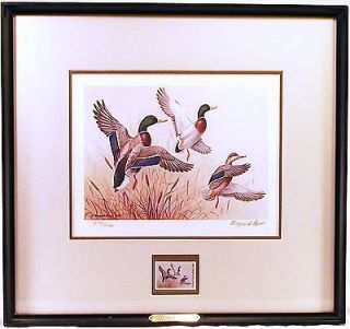 DUCKS UNLIMITED   1985 Signed LE (1575/5300) Maynard Reece Duck Print