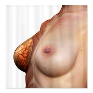Female muscles, computer artwork. Shower Curtain  Use code FREECART at Checkout
